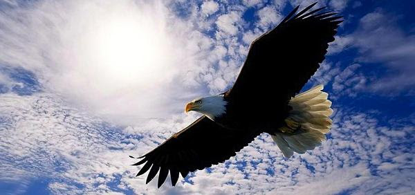 Leaders are Like Eagles by Jack A. Daniels